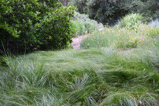 Carexpraeg