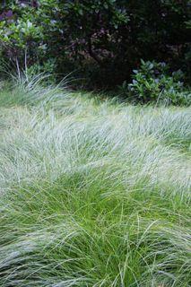 Carexpraeg2